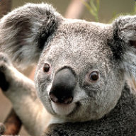 Team Fortress 2 Koala